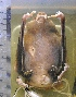 ( - MHNC-M-BAR 014)  @12 [ ] CreativeCommons - Attribution Non-Commercial (2011) Museo de Historia Alcide d'Orbigny Museo de Historia Natural Alcide d'Orbigny