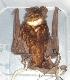 ( - MHNC-M-BAR 025)  @14 [ ] CreativeCommons - Attribution Non-Commercial (2011) Museo de Historia Alcide d'Orbigny Museo de Historia Natural Alcide d'Orbigny