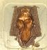 ( - MHNC-M-BAR 026)  @11 [ ] CreativeCommons - Attribution Non-Commercial (2011) Museo de Historia Alcide d'Orbigny Museo de Historia Natural Alcide d'Orbigny