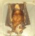 ( - MHNC-M-BAR 026)  @13 [ ] CreativeCommons - Attribution Non-Commercial (2011) Museo de Historia Alcide d'Orbigny Museo de Historia Natural Alcide d'Orbigny