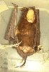 ( - MHNC-M-BAR 027)  @12 [ ] CreativeCommons - Attribution Non-Commercial (2011) Museo de Historia Alcide d'Orbigny Museo de Historia Natural Alcide d'Orbigny