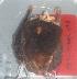 (Myotis cf. riparius - MHNC-M-BAR 079)  @12 [ ] CreativeCommons - Attribution Non-Commercial (2011) Museo de Historia Alcide d'Orbigny Museo de Historia Natural Alcide d'Orbigny