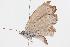 (Pseudozizeeria - BIOUG05357-C09)  @13 [ ] creative commons – non-commercial only (2014) Biodiversity Institute of Ontario Biodiversity Institute of Ontario