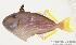 (Xanthichthys - MBIO1617.4)  @14 [ ] Unspecified (default): All Rights Reserved  Unspecified Unspecified