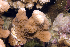 (Montipora sp. 1 - MBIO3466.1)  @11 [ ] Unspecified (default): All Rights Reserved  Unspecified Unspecified