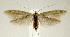 (Coleophora cratipennella - jflandry2392)  @15 [ ] Copyright (2007) Unspecified Canadian National Collection