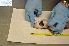 ( - 57136)  @12 [ ] CreativeCommons - Attribution Non-Commercial Share-Alike (2013) Angelo Ferrari Istituto Zooprofilattico Sperimentale delPiemonte Liguria e Valle D'Aosta