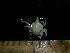(Leurocyclus - UNMDP MEJ 006)  @11 [ ] CreativeCommons – Attribution Non-Commercial Share-Alike (2014) Unspecified Laboratorio de Zoología de Invertebrados