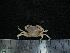 (Coenophthalmus - UNMDP MEJ 032)  @11 [ ] CreativeCommons – Attribution Non-Commercial Share-Alike (2014) Unspecified Laboratorio de Zoología de Invertebrados