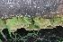 ( - BAB 3685)  @11 [ ] Copyright (2014) Gujarat Biodiversity Gene Bank, GSBTM, DST, GoG Gujarat Biodiversity Gene Bank, GSBTM, DST, GoG