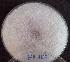 (Zygomycetes - BAB 4277)  @11 [ ] Copyrights (2014) Gujarat Biodiversity Gene Bank, GSBTM, DST, GoG Gujarat Biodiversity Gene Bank, GSBTM, DST, GoG