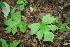(Dorstenia - BioBot00184)  @11 [ ] CreativeCommons - Attribution Non-Commercial Share-Alike (2010) Daniel H. Janzen Guanacaste Dry Forest Conservation Fund