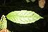(Cestrum - BioBot06821)  @11 [ ] CreativeCommons - Attribution Non-Commercial Share-Alike (2010) Daniel H. Janzen Guanacaste Dry Forest Conservation Fund
