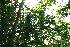 (Semialarium - BioBot11754)  @11 [ ] CreativeCommons - Attribution Non-Commercial Share-Alike (2010) Daniel H. Janzen Guanacaste Dry Forest Conservation Fund