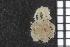 (Ophiothrix nociva - ZMBN_85729)  @11 [ ] CC-by-nc-sa (2014) University of Bergen University of Bergen, Natural History Collections