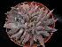 (Echeveria craigiana - JE-6343)  @11 [ ] Unspecified (default): All Rights Reserved  Unspecified Unspecified