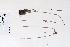 (Juncus arcticus ssp arcticus - 09PROBE-05270)  @11 [ ] Copyright (2010) Unspecified Unspecified