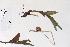 (Cypripedium passerinum - 09PROBE-05278)  @11 [ ] Copyright (2010) Unspecified Unspecified
