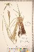 ( - CCDB-18290-D11)  @11 [ ] © (2014) Deb Metsger Royal Ontario Museum