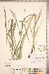 ( - CCDB-18290-C11)  @11 [ ] © (2014) Deb Metsger Royal Ontario Museum
