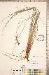 ( - CCDB-18290-G12)  @11 [ ] © (2014) Deb Metsger Royal Ontario Museum