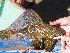 (Hypostomus luteomaculatus - CREG ECOMOL YC-162)  @13 [ ] Copyright (2009) UNLP Universidad Nacional de La Plata