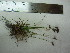 ( - TJD-679)  @11 [ ] CreativeCommons - Attribution Non-Commercial (2013) MTMG McGill University Herbarium