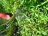 ( - TJD-689)  @11 [ ] CreativeCommons - Attribution Non-Commercial (2013) MTMG McGill University Herbarium
