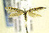 (Coleophora JFL282 - CNCLEP00108892)  @14 [ ] Copyright (2013) Jean-Francois Landry Canadian National Collection