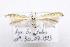 (Coleophora nevadella - CNCLEP00111101)  @11 [ ] Copyright (2014) Jean-Francois Landry Canadian National Collection