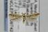 (Coleophora JFL299 - CNCLEP00097424)  @13 [ ] Copyright (2013) Jean-Francois Landry Canadian National Collection
