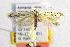 (Coleophora hamata - CNCLEP00111721)  @13 [ ] Copyright (2014) Giorgio Baldizzone Research Collection of Giorgio Baldizzone