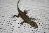  (Anolis laeviventris - MSB POE3633)  @14 [ ] Unspecified (default): All Rights Reserved  Unspecified Unspecified