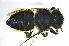  (Megachile sp. E - BAG003)  @11 [ ] CreativeCommons - Attribution Non-Commercial Share-Alike (2012) Scott Groom Flinders University