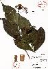 (Renistipula - Velasco626)  @11 [ ] Copyright  K. Hernandez y P. Mendoza 2010 Unspecified