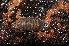 (Armadillidium opacum - BC ZSM MYR 00563)  @13 [ ] CreativeCommons - Attribution Non-Commercial Share-Alike (2010) Jörg Spelda ZSM (Zoologische Staatssammlung Muenchen)