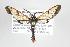 (Abrochia - ArcCR 41893)  @14 [ ] Copyright (2010) Unspecified Institut fuer Spezielle Zoologie und Evolutionsbiologie, Friedrich-Schiller Universität Jena