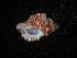 (Cabestana - NMSC_0049)  @13 [ ] Copyright  Steve Smith National Marine Science Centre