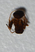 (Lasius platythorax - TKDNA31)  @13 [ ] Unspecified (default): All Rights Reserved  Unspecified Unspecified