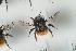 (Bombus lapponicus - NOAPI593)  @11 [ ] CC-NC-SA (2014) Arnstein Staverlokk Norwegian Institute of Nature Research