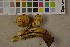 (Pholiota squarrosa - O-F-75592)  @11 [ ] by-nc (2014) Siri Rui Natural History Museum, University of Oslo, Norway