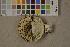 (Russula delica - O-F-75665)  @11 [ ] by-nc (2014) Siri Rui Natural History Museum, University of Oslo, Norway
