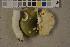 (Russula aeruginea - O-F-75666)  @11 [ ] by-nc (2014) Siri Rui Natural History Museum, University of Oslo, Norway