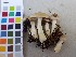 (Tricholoma inamoenum - O-F-75138)  @11 [ ] by-nc (2014) Unspecified University of Oslo, Natural History Museum