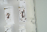 (Formica cunicularia - HYMNI633)  @11 [ ] CC-NC-SA (2014) Arnstein Staverlokk Norwegian Institute of Nature Research