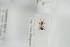 (Leptothorax muscorum - NOFOR143)  @12 [ ] CreativeCommons - Attribution Non-Commercial Share-Alike (2014) Arnstein Staverlokk Norwegian Institute of Nature Research