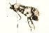 (Orthaga seminivea - 09-NSWHH-0313)  @13 [ ] CreativeCommons - Attribution Non-Commercial Share-Alike (2010) Unspecified Biodiversity Institute of Ontario