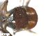 (Simulium pseudocallidum - BIOUG01380-B02)  @12 [ ] CreativeCommons - Attribution Non-Commercial Share-Alike (2011) BIO Photography Group Biodiversity Institute of Ontario