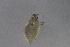 (Neophyllaphidinae - NZAPH033)  @11 [ ] Copy right (2014) University  of Waikato University of Waikato