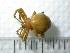 (Aranidae - NZSPI014)  @13 [ ] Unspecified (default): All Rights Reserved  Unspecified Unspecified